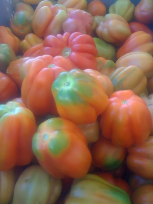 Be Wise Ranch heirloom tomatoes